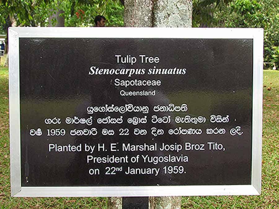 ...i drvo koje je posadio J. B. Tito