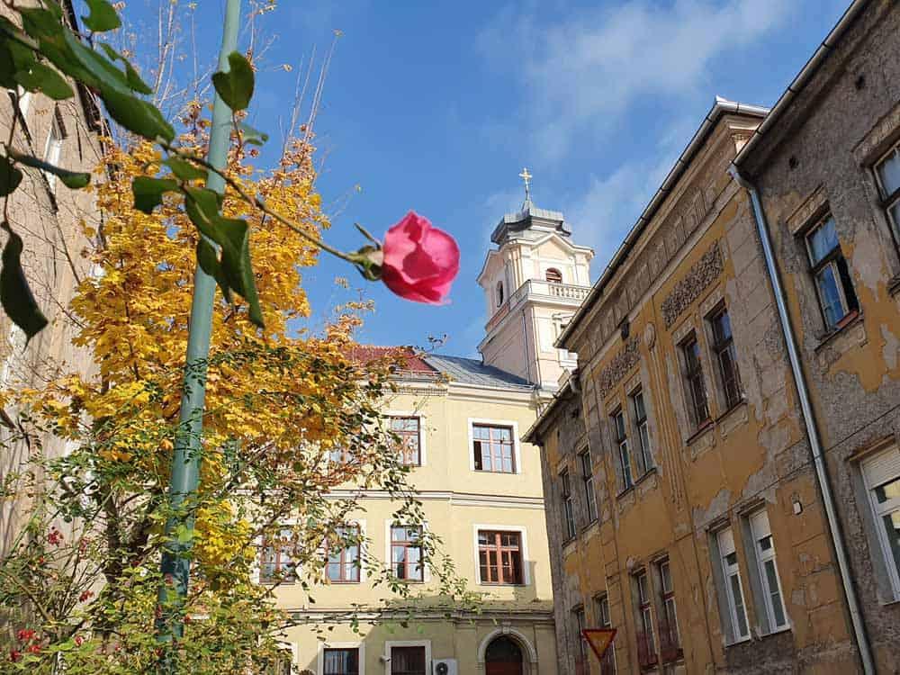 Jedna ruža u Petrakijinoj ulici