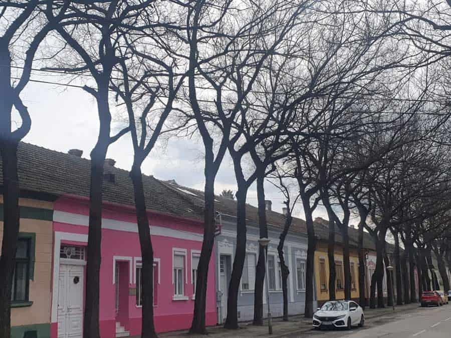 Najlepša ulica u Srbiji: Generala Drapšina je najlepša kad drvored ozeleni