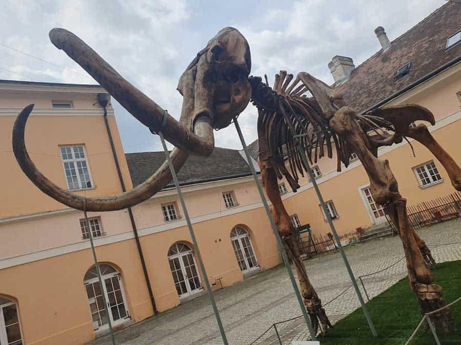 Dvorište Narodnog muzeja: Replika skeleta Kike