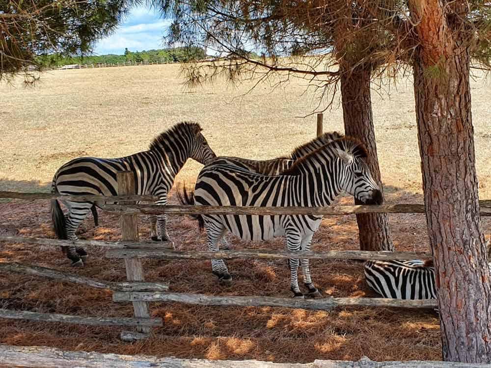 TITOVA MENADŽERIJA: Scene iz Zoo-vrta