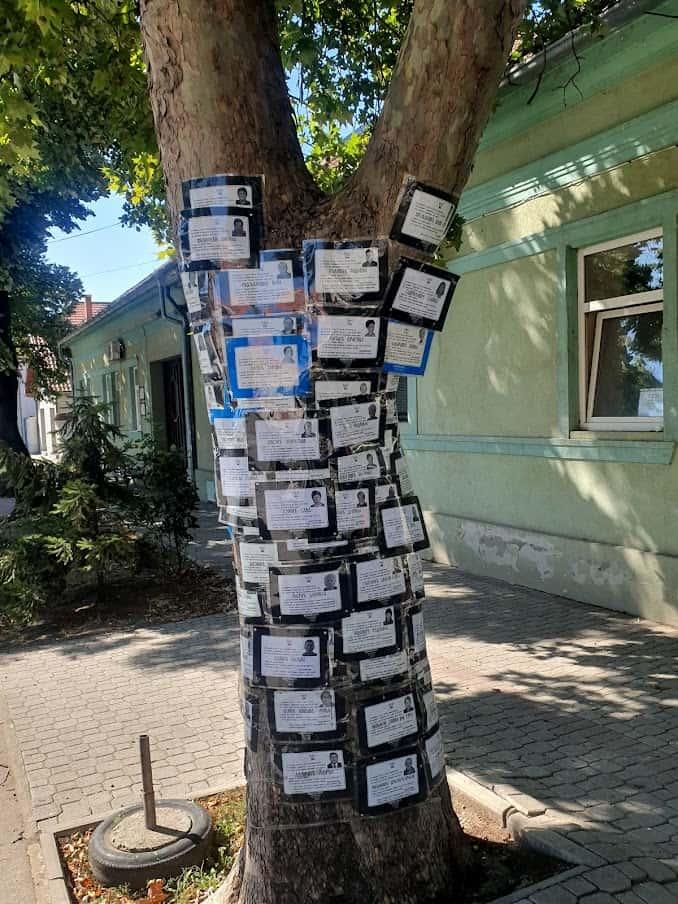 Sumorni prizor: Drvo sa umrlicama od korena do krošnje